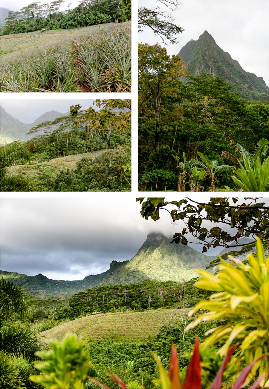 Flitterwochen - Hochzeitsreise Moorea - Opunohu - Route des Ananas
